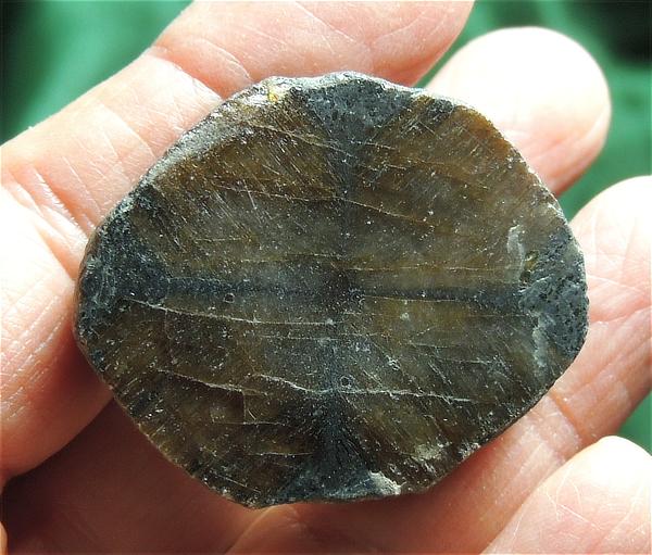 "Unassuming Polished Chiastolite ""Coin"""
