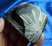 Snowflake Palm-Sized Chrysanthemum Stone